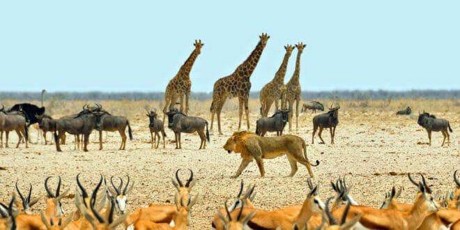 Capodanno in Namibia, safari