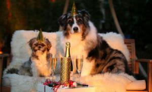 Immagini di Capodanno, animali in festa